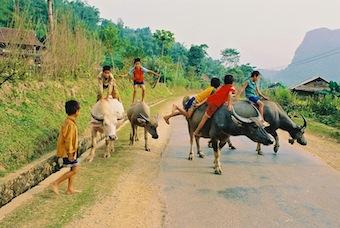 Enfants et buffles au Vietnam